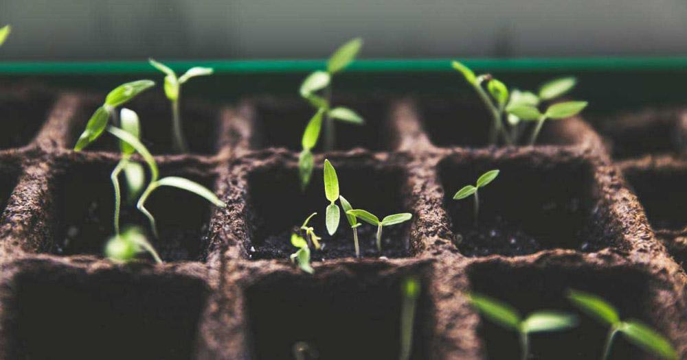 อาชีพเสริม 8: ปลูกผักขาย